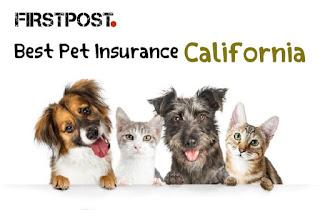 Best Pet Insurance in California for 2021