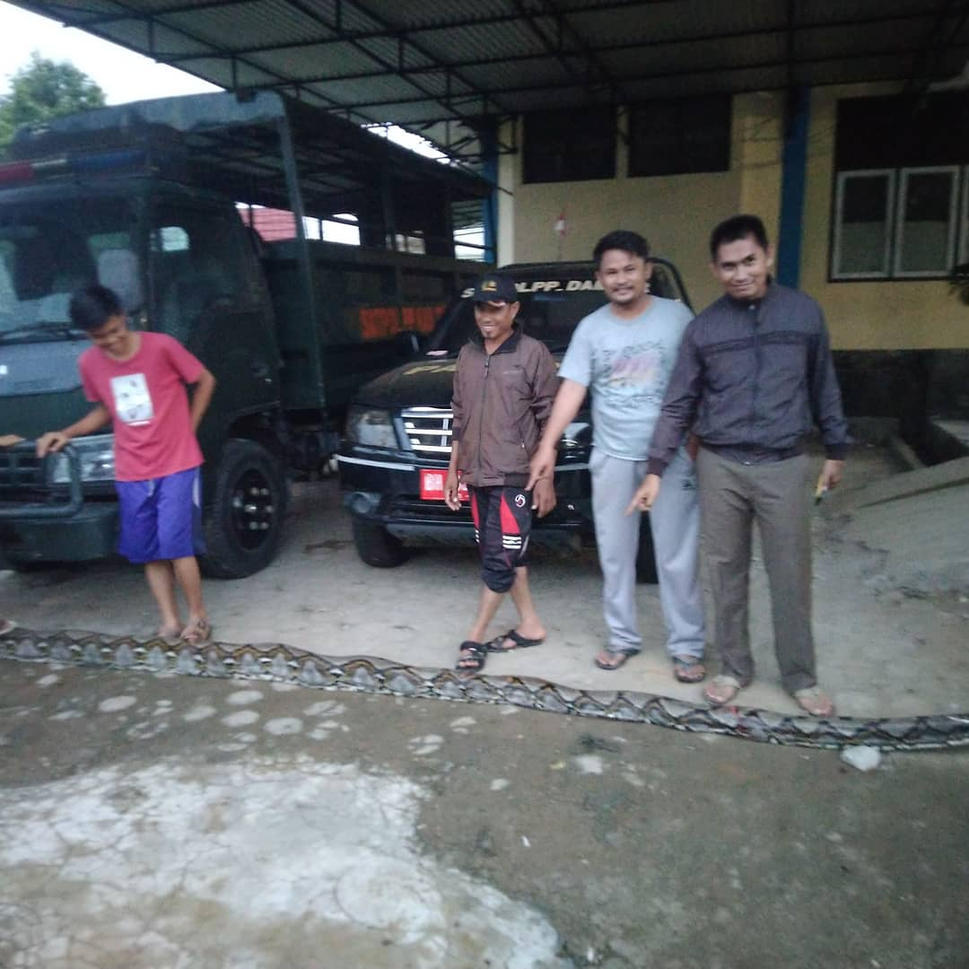 Ular Phyton Sepanjang 6 Meter Mangsa Kambing Warga
