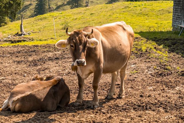 Kulinarische Genusswanderung – Bürserberg | Wandern Brandnertal | Wanderung Vorarlberg 09