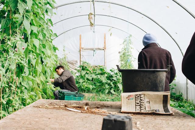 البيوت البلاستيكية الزراعية pdf البيوت البلاستيكية ويكيبيديا البيوت البلاستيكية الزراعية البيوت البلاستيكية وأهميتها تعريف البيوت البلاستيكية وأهميتها البيوت البلاستيكية و استعمالاتها البيوت البلاستيكية موضوع البيوت البلاستيكية للنباتات الزراعة في البيوت البلاستيكية زراعة في البيوت البلاستيكية بيوت بلاستيكية صغيرة صناعة البيوت البلاستيكية صنع البيوت البلاستيكية شروط البيوت البلاستيكية بيوت بلاستيكية زراعية البيوت المحمية زراعة زراعة البيوت البلاستيكية خصائص البيوت البلاستيكية البيوت الزجاجية الزراعية البيوت الزجاجية للزراعة البيوت الزجاجية للحدائق بيوت الزجاجية الفرق بين البيوت الزجاجية والبلاستيكية البيوت البلاستيكية موضوع الزراعة في البيوت الزجاجية زراعة البيوت الزجاجية
