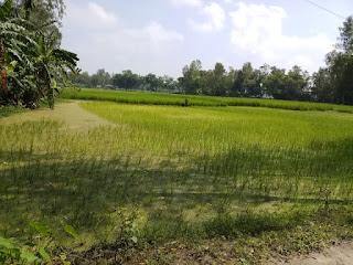 Village agricultural land