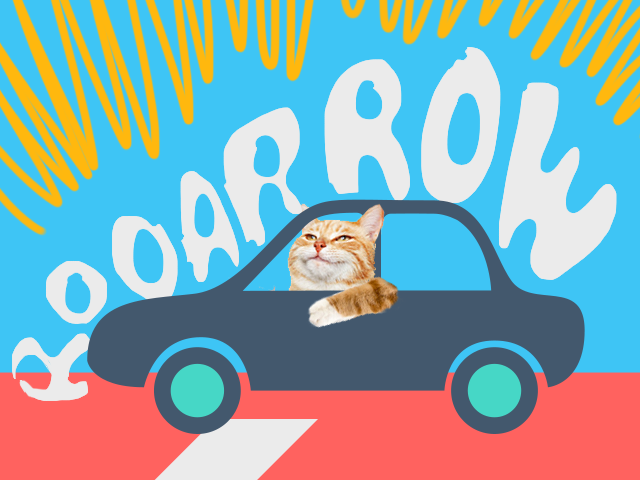 Smug cat in a car making a lion's roar