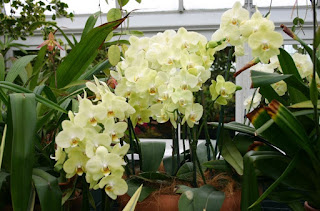 orchid growing supplies