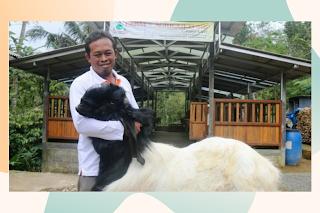 Sosok -Pak-Toto-Suharto-dengan-kambing-etawa-dan-tempat-budidayanya.