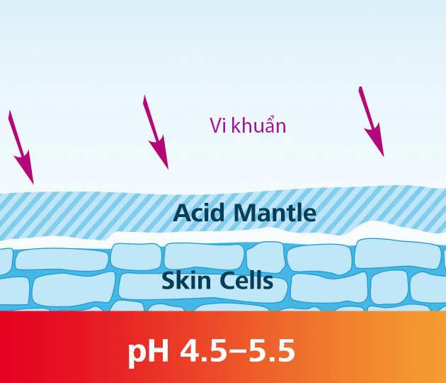 Da của chúng ta được bảo vệ và giữ ẩm bởi một lớp màng acid có độ pH 4,5-5,5