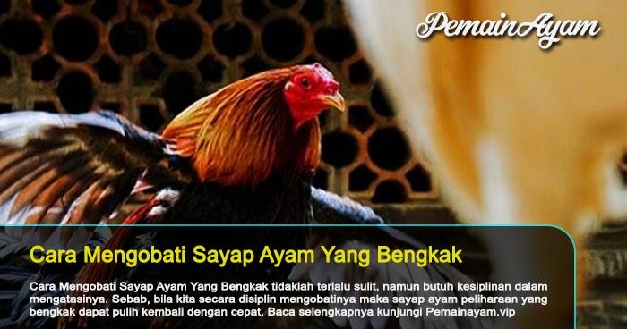 Membuat Sembuh Sayap Ayam Yang Bengkak - S128 - SV388