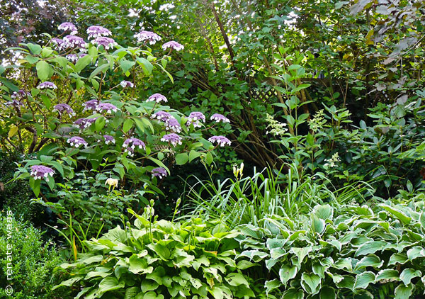 Staudenpflanzung mit Taglilie, Funkie und Gräsern im Halbschatten