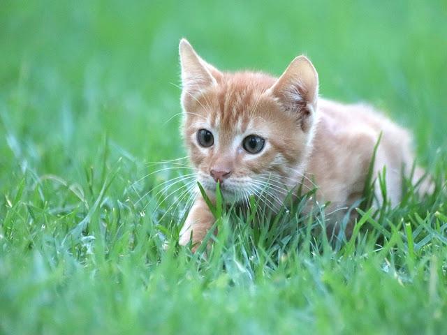 140+ Cute Cat Images   Cat Wallpaper free download HD