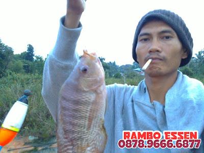 Rambo Essen Ikan Nila Harian