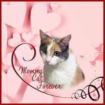 My Amazing Mommy Cat