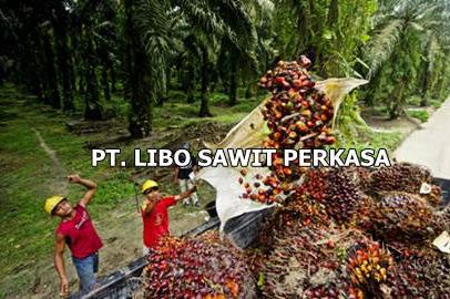 Lowongan PT. Libo Sawit Perkasa Pekanbaru Februari 2019