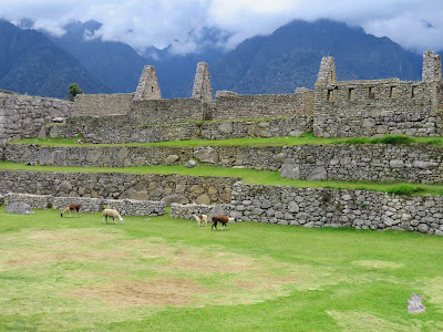 Machu Picchu Pics: Llamas in front of the ruins of Machu Picchu with clouds over the Andes in the distance
