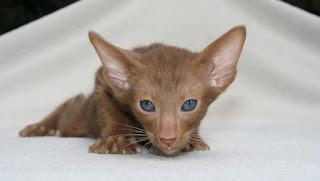 Umur Anak Kucing Boleh Dimandikan