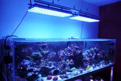 Daftar Harga Lampu Aquarium Terbaru 2019