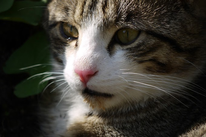 Why do cats purr? Everything you need to know