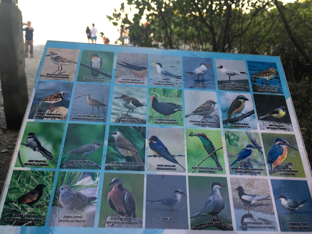 bird watching tour in pampanga