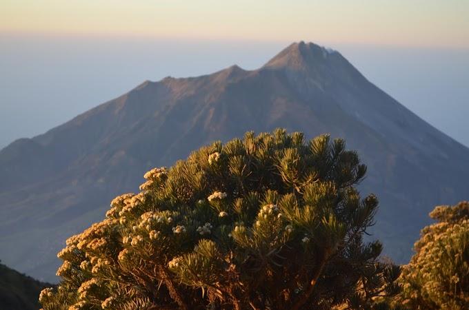 Paket Ekonomis Mendaki Gunung Merbabu Jalur Selo 2H1M
