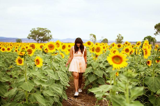 Sunflower Fields Liverpool Plains NSW