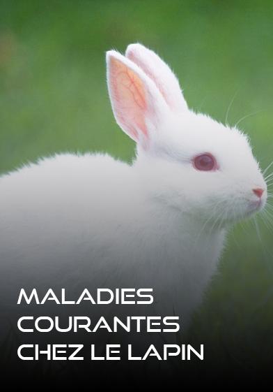 Maladie_courante_chez_les_lapins - WWW.VETBOOKSTORE.COM