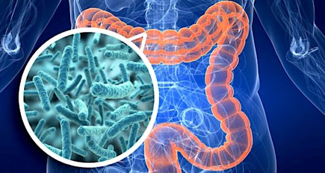 In obese people, bacteria escape from the intestine to spread throughout the body
