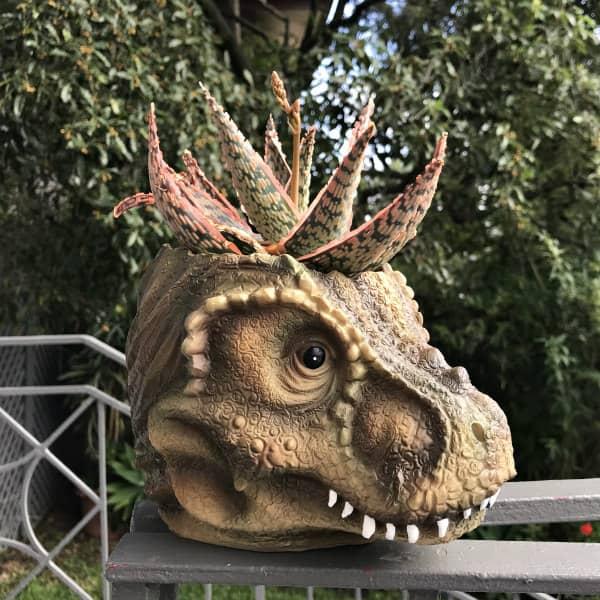 dinosaur head planter containing succulent