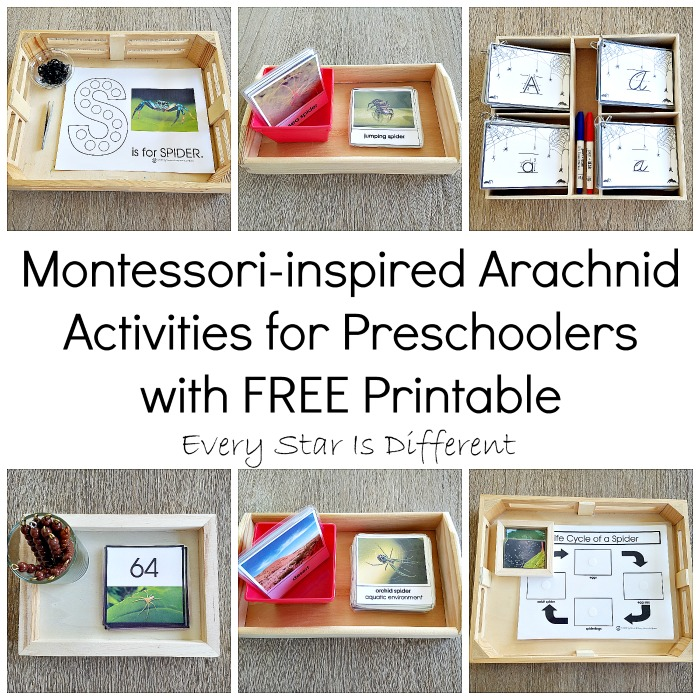Montessori Arachnid Activities for Preschoolers