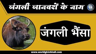 Yak Animal Name In Hindi | Wild Animals Name In Hindi
