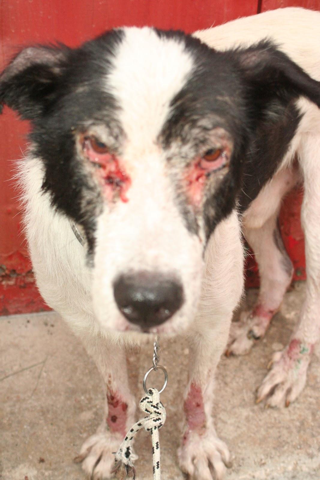 The Dozen Dog Diaries: Treating Leishmaniasis (Part One ...