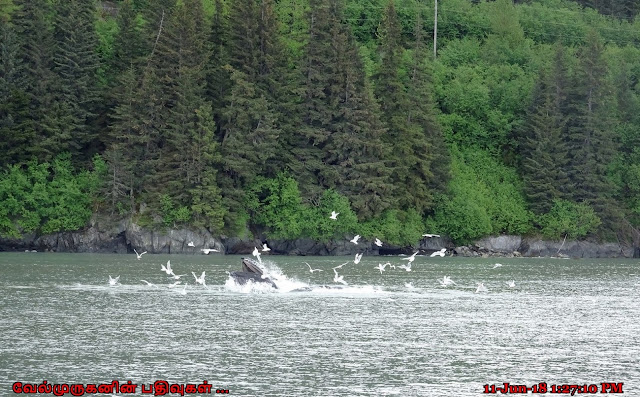 Resurrection Bay Whale Watching