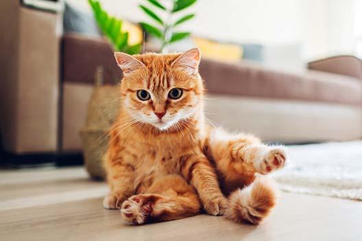 Czy kota niewychodzącego z domu trzeba odrobaczać?