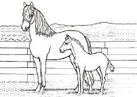 Malvorlagen Pferde Und Ponys X Claudia Schiffer