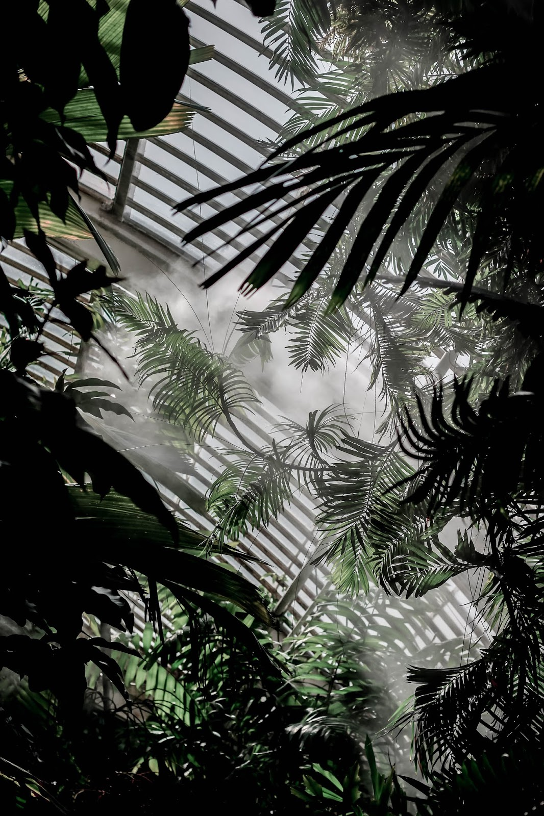 Kew Gardens Humidity The Palm House