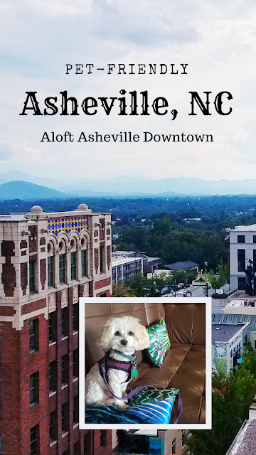 Pet-Friendly Asheville, NC