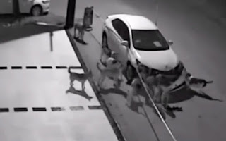 Τι μπορεί να κάνει μια αγέλη σκύλων σε ένα παρκαρισμένο αυτοκίνητο