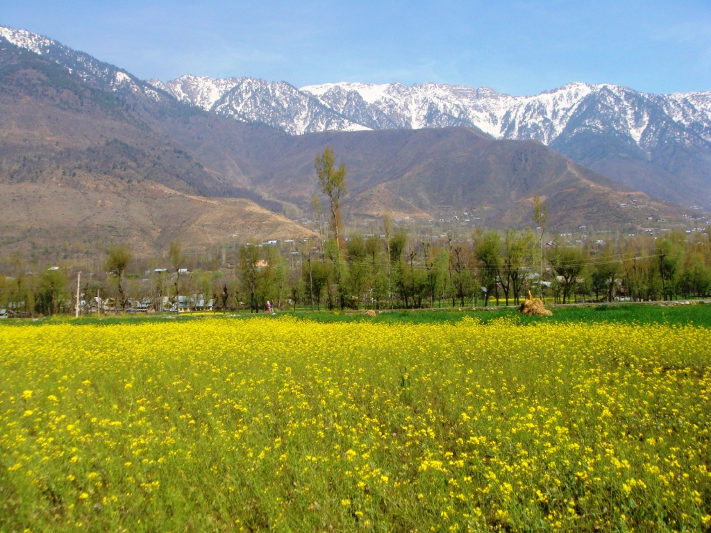 Is It Safe To Travel To Kashmir In June