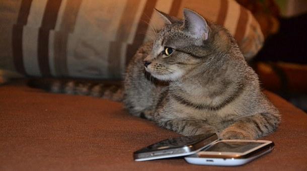 قط يرسل صورة صاحبته عارية إلى بائع سيارات