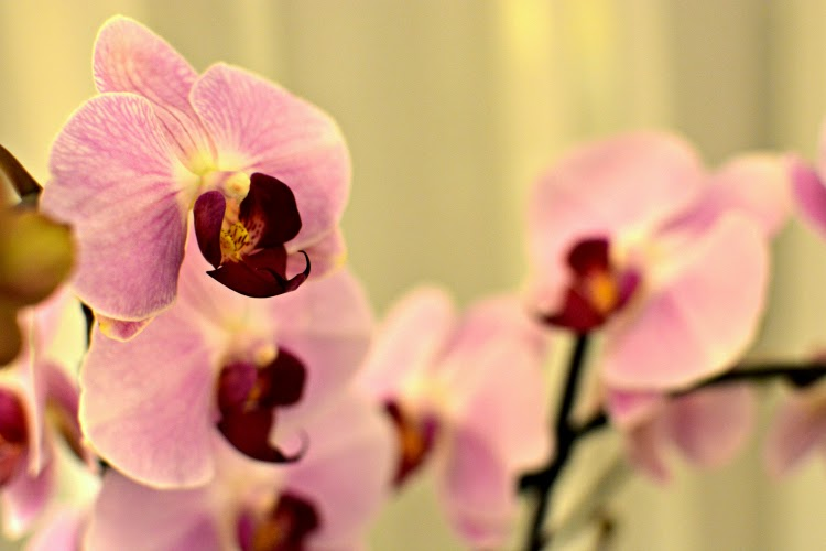 Langham Hotel pink orchids
