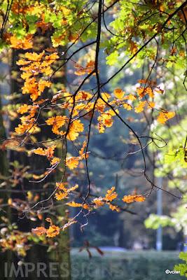 bizarres Herbstlaub