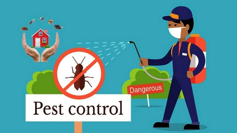 Looking for Pest Control service? Here's what you need to do.