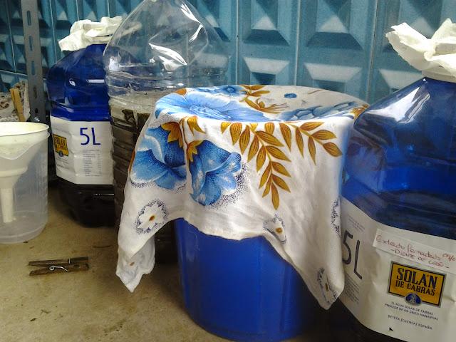 Varios fermentos en proceso de maduración