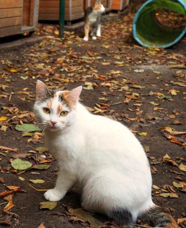 autumn pictures cat rescue