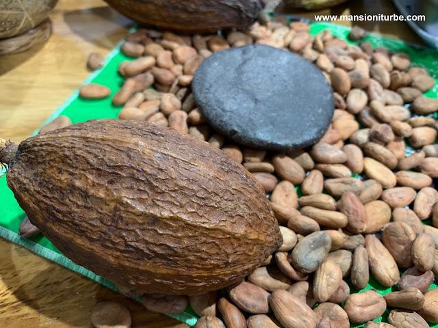 Cacao en México