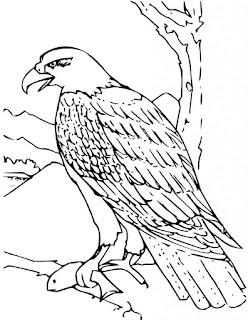 Free Printable Eagle Coloring Sheet For Kids