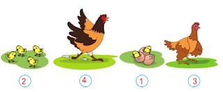 Kunci Jawaban Buku Kelas  4 SD Tema 6 Halaman 2, 4 dan 8