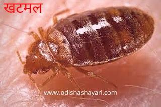 Bedbugs (खटमल)
