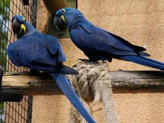 Talkative parrots with fertile parrot eggs