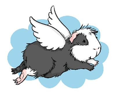 Plaatje een cavia als engel met witte vleugels
