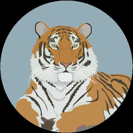Амурский тигр - маленькая картинка