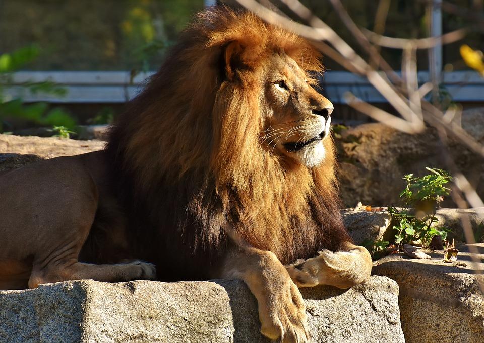 Зоопарки в Дании просят приносить домашних питомцев на корм львам