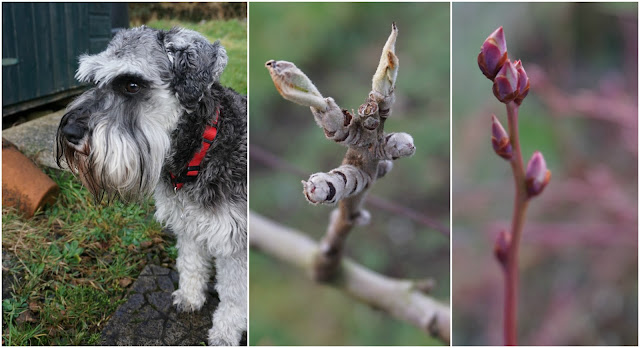Toby the dog and some other buds - Carrie Gault